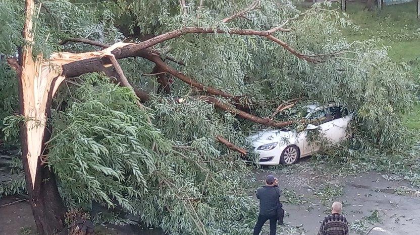 копейск упало дерево